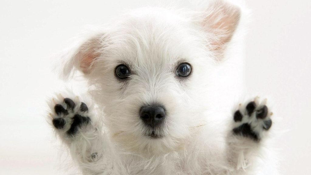 21 de julio, Día Mundial del Perro, los mejores amigos de la pandemia