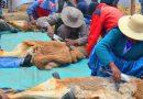 La provincia trabaja para lograr la exportación de lana de vicuña