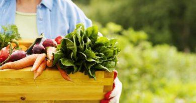 ¿Cómo garantizar el buen estado de los alimentos y preservar su valor nutricional?