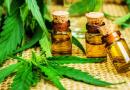Jujuy producirá cannabis para uso medicinal