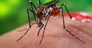 Inició oficialmente la campaña de lucha contra el dengue