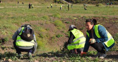 Plantan más de 30 árboles en el parque Belgrano