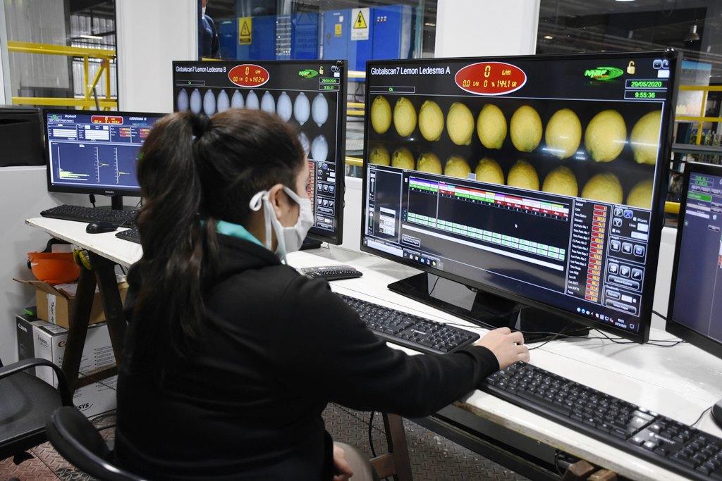 Exportación de limones: Ledesma trabaja para triplicar el envío de la producción jujeña